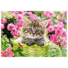 Castorland Пазл Castorland Котёнок в саду, 500 деталей