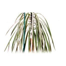 опора для растений набор палок 10шт 1х50см дерево