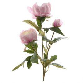растение искусственное Роза пионовидная светло-розовая 75см