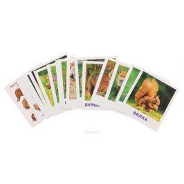 Айрис-пресс Обучающие карточки Кто живет в лесу?