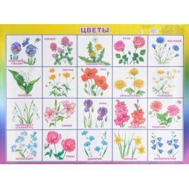 Алфея Обучающий плакат Цветы